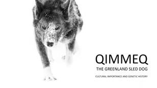 KICK-OFF on QIMMEQ