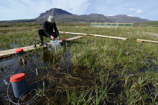 Gas flux measurements near snow fence site