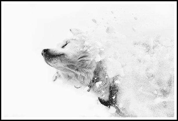 A DOG'S LIFE II
