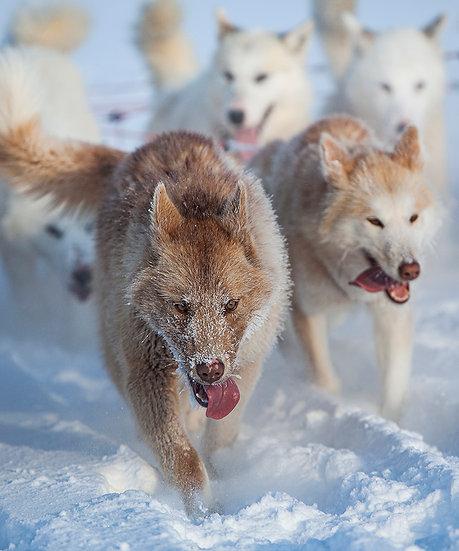 THE LEADER OF THE PACK