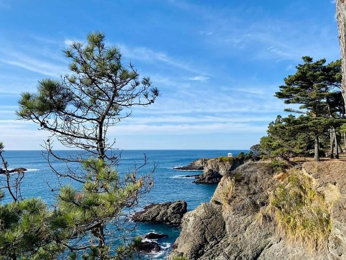 Mendo Coast pine.