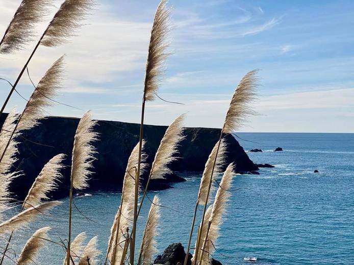 Mendo Coast Pampas.