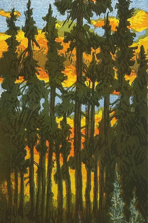 Lodgepole Sunset