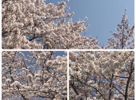 4月の予定(チャンドラ・ケイ/大倉山占星術研究会+ヨガ)