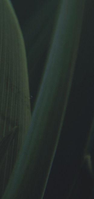 vergrößerte Grass