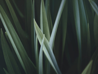 Why grass is more important than you think