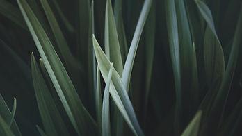 Grass Увеличенное