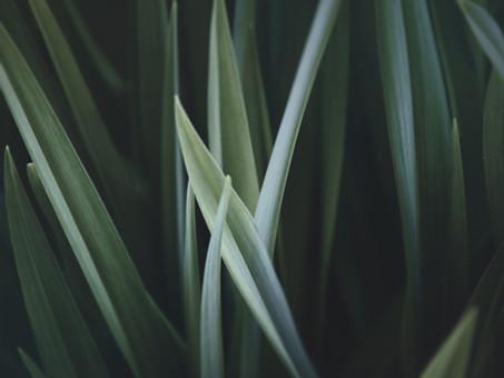 Wieso Gras wichtiger ist als sein Ruf