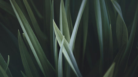 Magnified Grass
