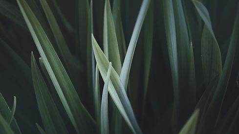 Magnified grama