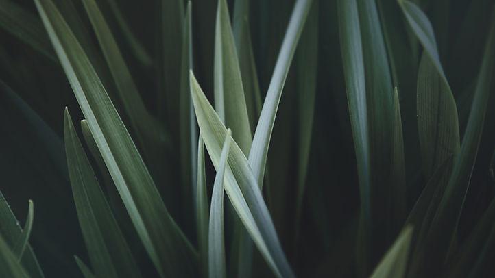 Zvětšené Grass