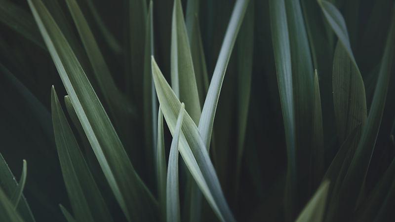 förstorade Grass