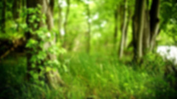 1 green grass.jpg