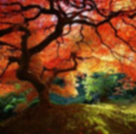 1 orange tree.jpg