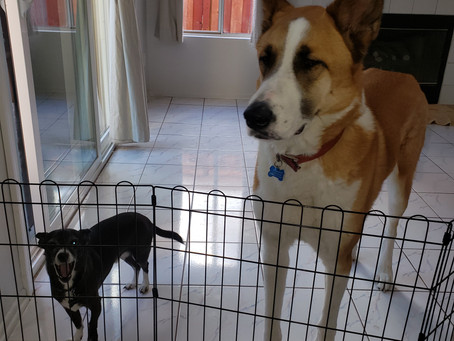 #D1 Moving Pets Overseas Intro: Are Pets Really Like Their Owners? Damn!
