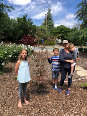 We Buried The Placentas: A Mother's Day Tale