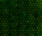 Blastoid, synthetic embro, stem cells, Nicolas Rivron