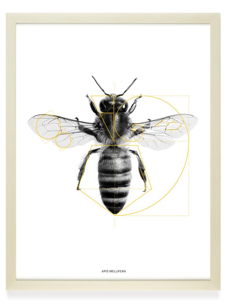 Biene – Siebdruck