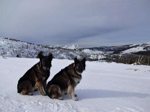 Snow Beasts