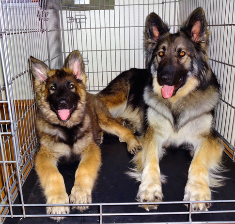 Odin And Puppy Loki