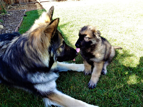 Loki Meeting His Brother