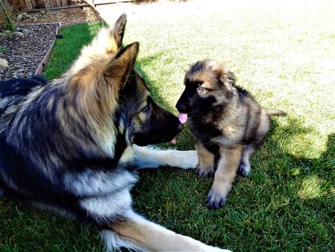 Loki Meeting His Brother