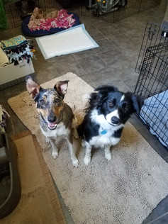 Post walk treats for Ani and Wilson