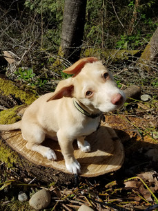 Puppy Photo Shoot!