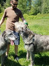 Irish Wolfhound Walk