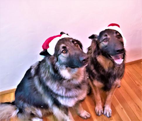 Santa Wookies