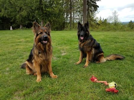 Loki and Bucker