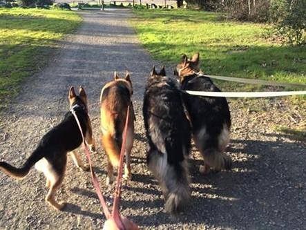 Shepherd Pack