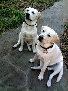 Brothers in Handsomeness
