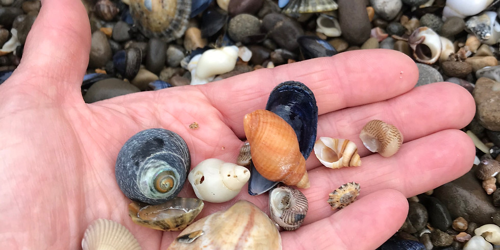 All about Seashells