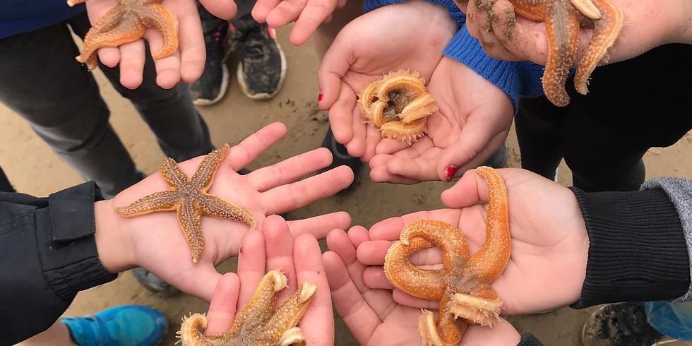 Home Ed Class - Starfish