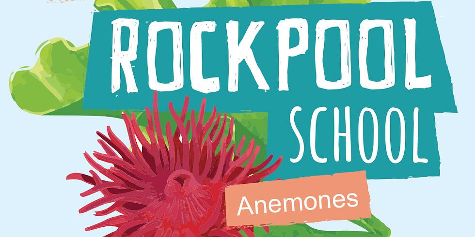Rockpool School | Week 3 Anemones