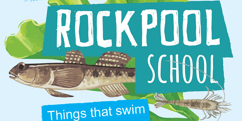 Rockpool School | Week 4 Things that swim