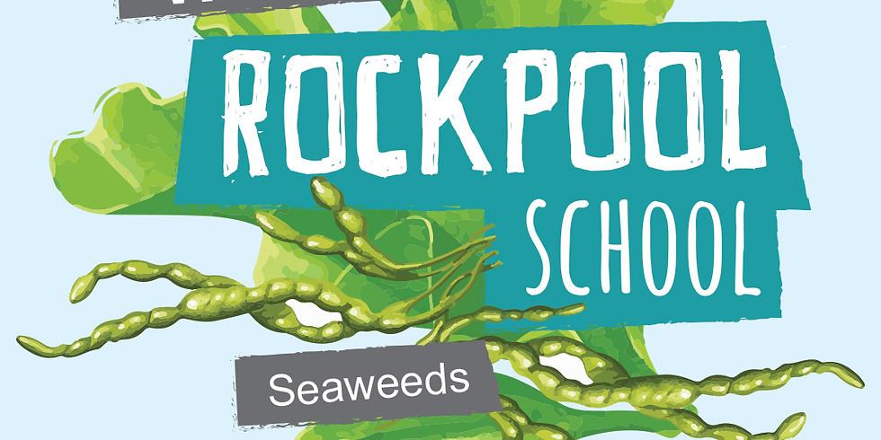 Rockpool School | Week 7 Seaweeds