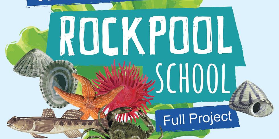 Rockpool School | Full 7 week project (1)