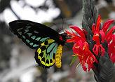 bright butterfly 1.jpg