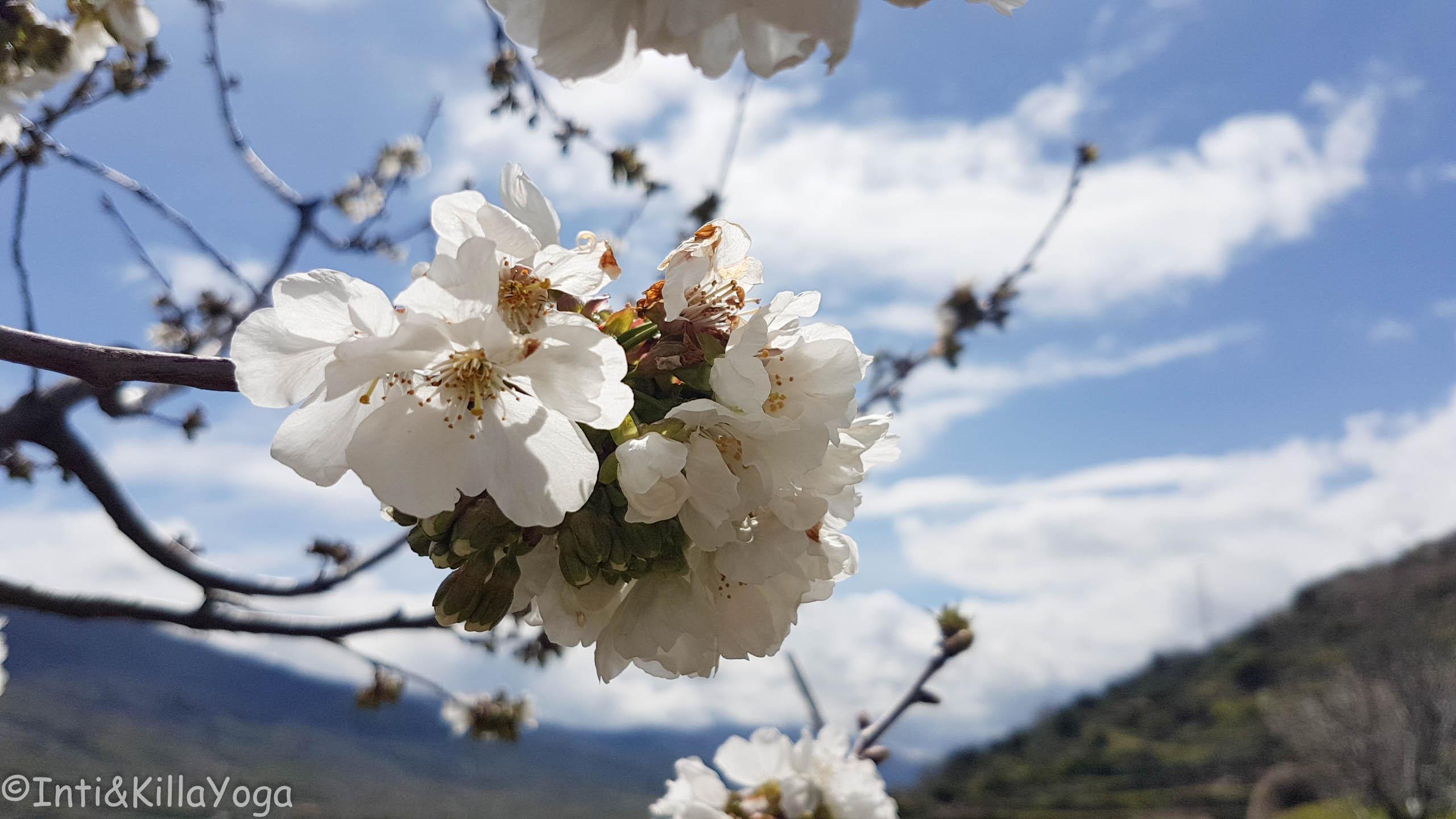 florecer...