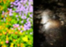 19_PortfolioSite_Selected_Hyf-4.jpg
