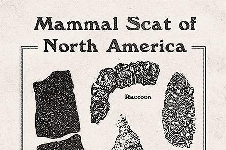 Alltimers - Mammal Scat of North America