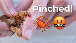 pinchhh.jpg