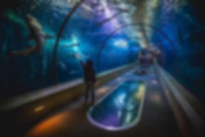 Into the Deep.jpg 🦈_.jpg_.jpg_.jpg_.jpg