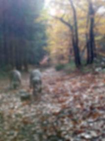 Zyra en Lex in het bos.jpg