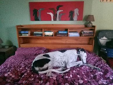 heerlijk op bed.jpg