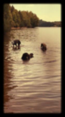 plonsen in Lac st agnan_edited.jpg