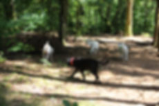 gasthonden en Jean logeerhond in het bos