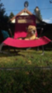 Mauri op zijn rode zetel.jpg